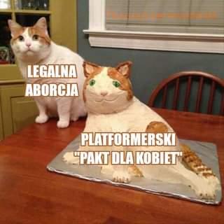 """May be an image of cat and text that says 'fb.com/czerwonobiali LEGALNA ABORCJA PLATFORMERSKI """"PAKT DLA KOBIET""""'"""