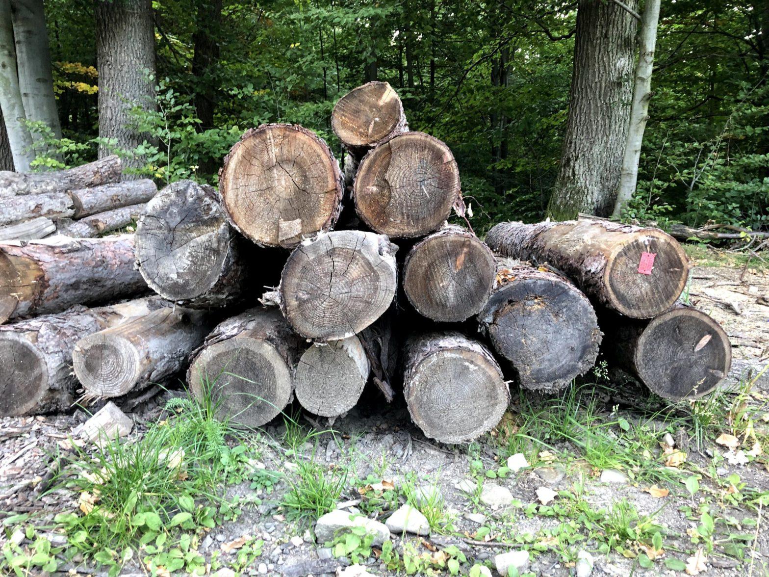 Ile nas kosztują leśnicy? - Równość